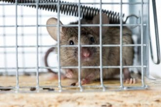 How to Get Rid of Mice in the House (in 8 Steps)